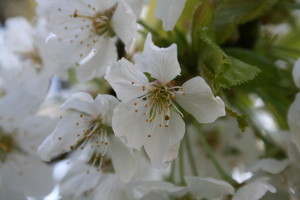 Bachblütenberatung