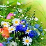 Bachblütenberater für Tiere